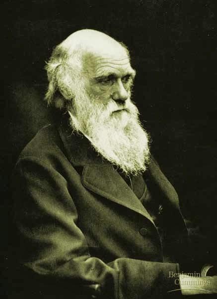 Alla ricerca delle origini, terza parte  Rifacciamo i conti con Darwin