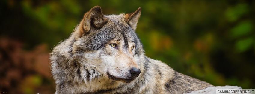 Il lupo e l'aurora, seconda parte – Mario Michele Merlino