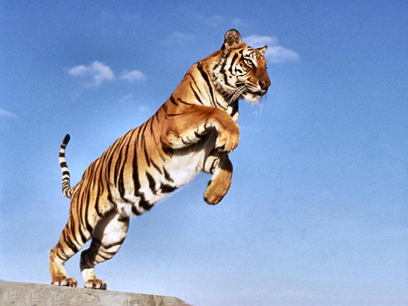 Il ritmo della tigre – Anna K. Valerio