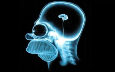 Il trionfo della stupidità, seconda parte – Fabio Calabrese