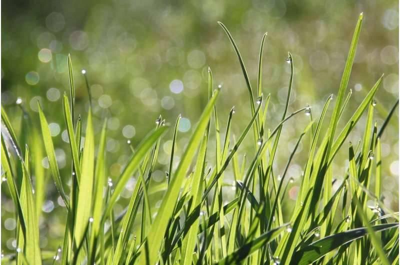 L'erba voglio – Roberto Pecchioli